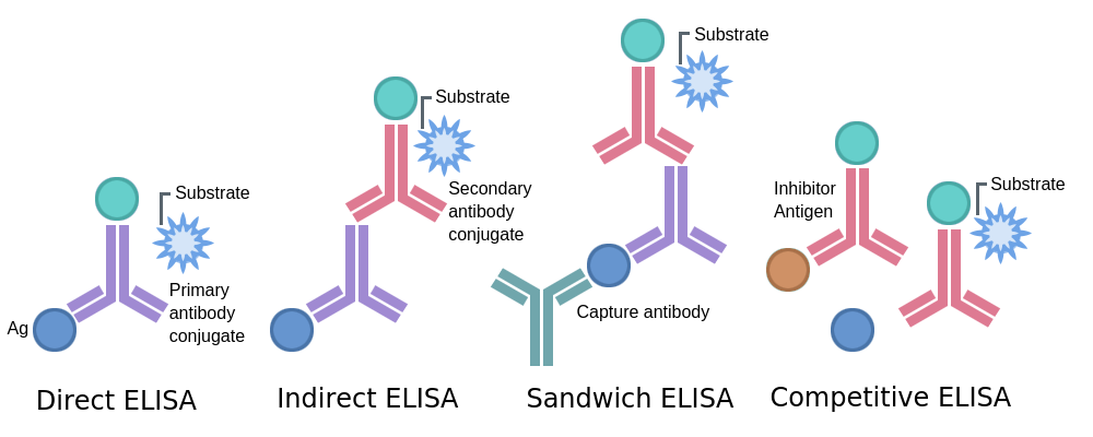 Types of ELISA - Labster Theory