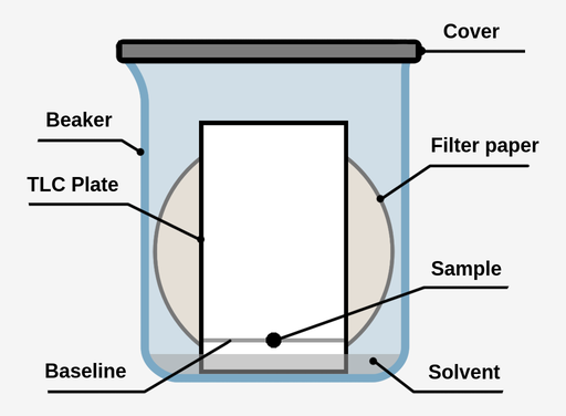 A TLC development chamber, a TLC plate is inside a covered beaker with a circular filter paper behind it. The TLC plate has a line drawn approximately 1.5 cm from the bottom of the plate, and a black sample dot on the center of this line. A small amount of solvent is present in the beaker, reaching just under the sample spot.